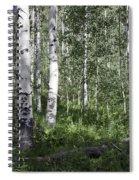 Forever Aspen Trees Spiral Notebook