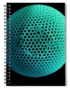 Fossil Diatom, Sem Spiral Notebook