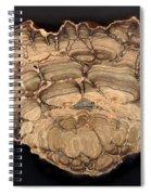 Fossil Stromatolite Spiral Notebook