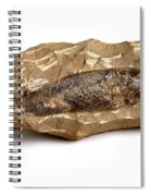Fossilized Fish Spiral Notebook