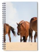 Four Wild Mustangs Spiral Notebook