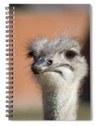 Fourth Quarter Letdown Spiral Notebook