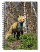 Fox And Birches Spiral Notebook