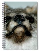 Foxy Eyes Spiral Notebook