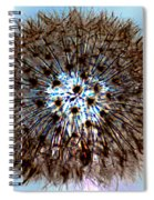 Fractal Seed Spiral Notebook