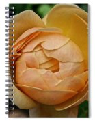 Fragrant English Rose Spiral Notebook