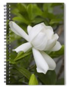 Fragrant White Gardenia Blossom Spiral Notebook