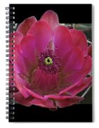 Framed Fuchsia Cactus Flower Spiral Notebook