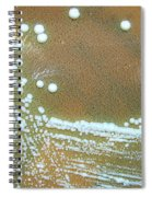 Francisella Tularensis Culture Spiral Notebook