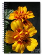 French Marigold Named Starfire Spiral Notebook