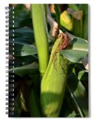 Fresh Corn On The Cob Spiral Notebook