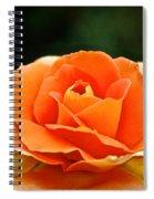 Fresh Peach Petals Spiral Notebook