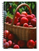 Fresh Red Plums In The Basket Spiral Notebook