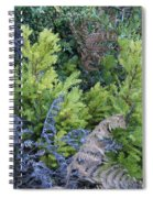 Fresh Young Redwoods On Mt Tamalpais Spiral Notebook