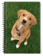 Friendly Dog Spiral Notebook