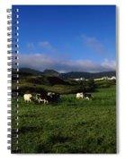 Friesian Cattle, Allihies, Co Cork Spiral Notebook