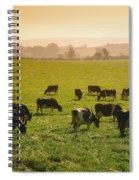 Friesian Cattle Cattle Grazing Spiral Notebook