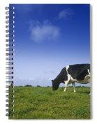 Friesian Cow Grazing In A Field Spiral Notebook