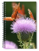 Fritillary Wings And Thistles Spiral Notebook