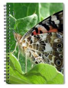 Frittary Among The Green Spiral Notebook