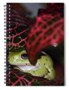 Frog On A Leaf Spiral Notebook
