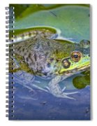 Frog Resting On A Lily Pad Spiral Notebook