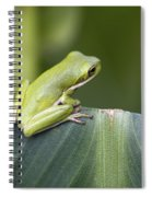 Froggie On A Leaf Spiral Notebook