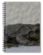 Froggy Spiral Notebook