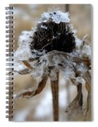 Frost And Snow On Dead Daisy Spiral Notebook
