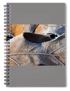 Frost On Oak Leaf Spiral Notebook