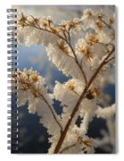 Frosty Dry Wood Aster Spiral Notebook