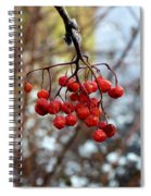 Frozen Mountain Ash Berries Spiral Notebook