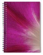 Fuchsia Morning Glory Spiral Notebook