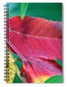 Full Spectrum Sumac Spiral Notebook