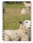 Funny Sheep Spiral Notebook
