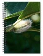 Fuzzy Magnolia Spiral Notebook
