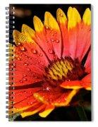 Gaillardia Flower Spiral Notebook