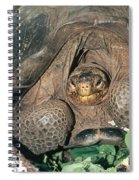Galapagos Giant Tortoise Spiral Notebook