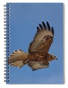 Galapagos Hawk Flying Spiral Notebook