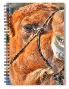 Gangsta Grillin This Camels Chillin Spiral Notebook