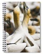 Gannets, Parc National De Spiral Notebook