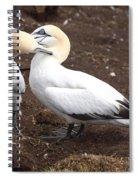Gannets Showing Mutual Preening Behavior Spiral Notebook