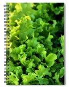 Garden Fresh Salad Bowl Lettuce Spiral Notebook