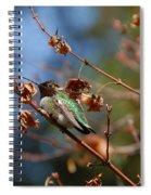 Garden Hummer Spiral Notebook