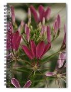 Garden Stinkweed Flower 1 Spiral Notebook
