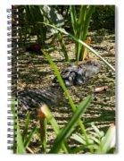 Gator Sunning Spiral Notebook