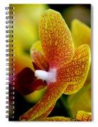 Gazing Spiral Notebook