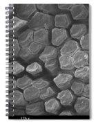 Gecko Tongue, Sem Spiral Notebook