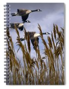 Geese Coming In For A Landing Spiral Notebook