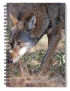 Gentle Wolf Spiral Notebook